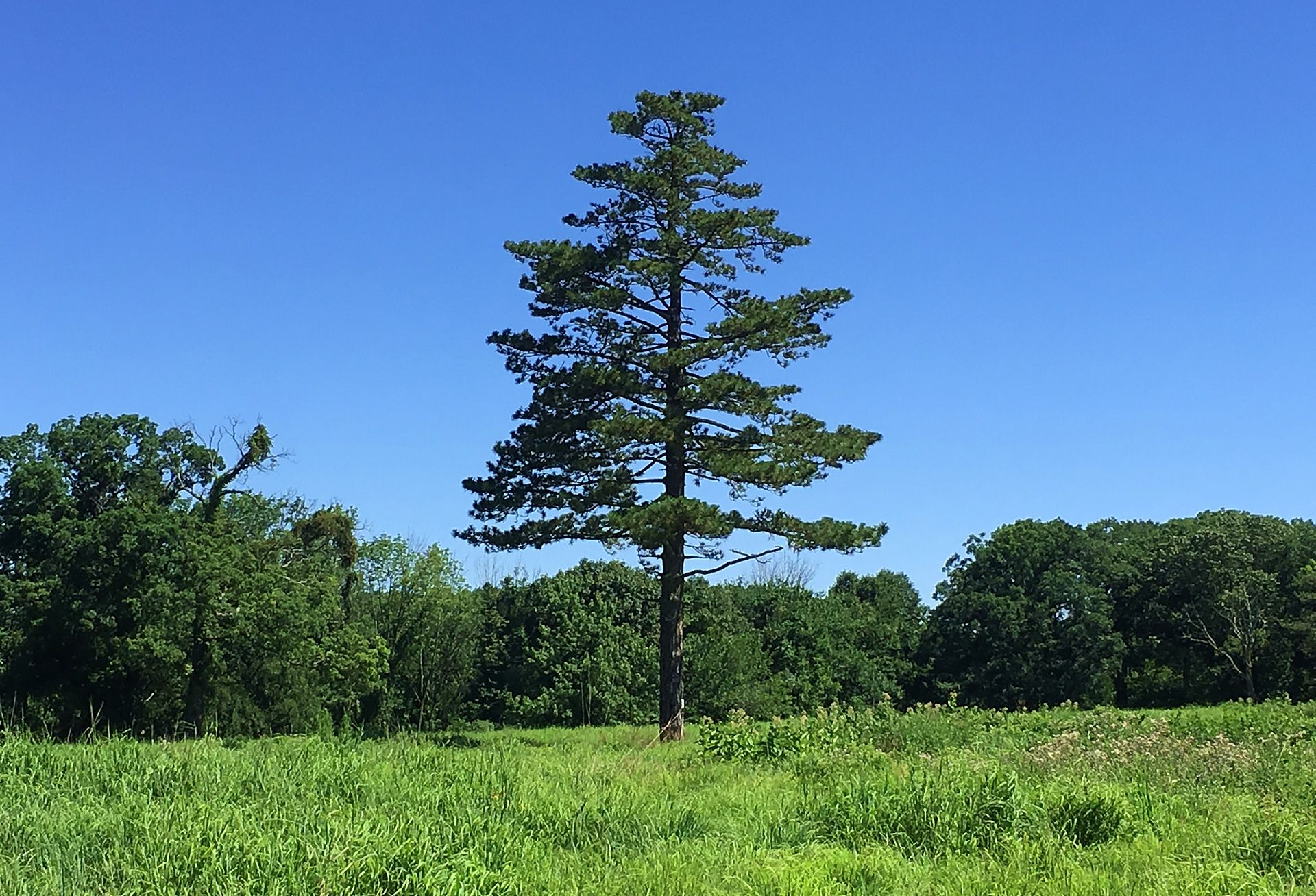 The Lonesome Pine - Hilltop Reservation Meadow