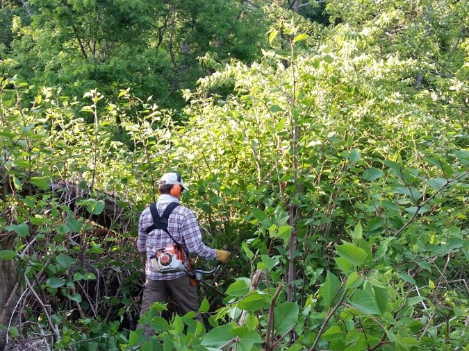 Controlling Invasive Plants
