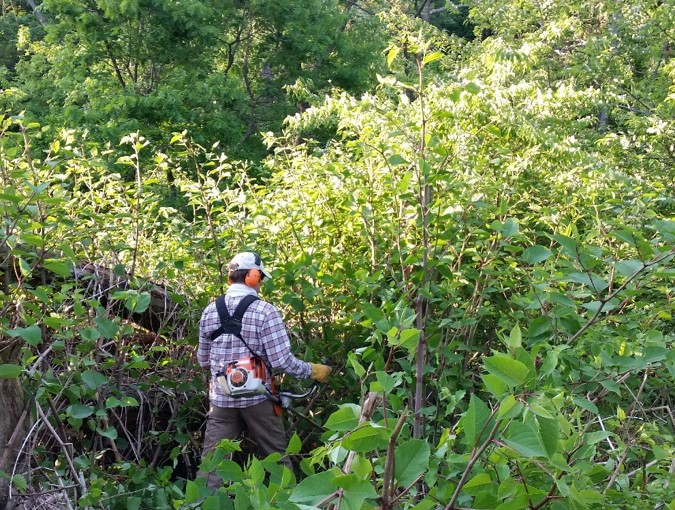 Controlling foreign invasive plants.